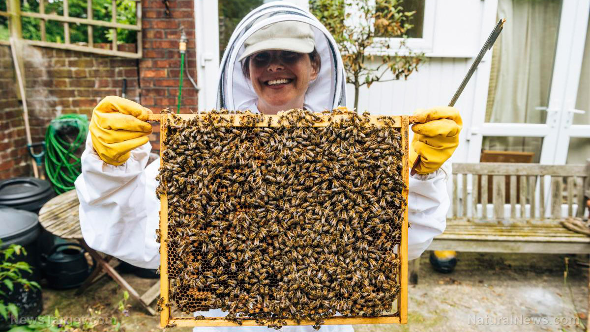 Honeycomb Benefits of Being a Beekeeper